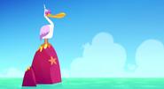 Pelican in Islands