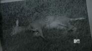 Deer found three months ago
