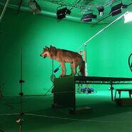 Teen Wolf Season 5 Behind the Scenes wolfdog on set undated