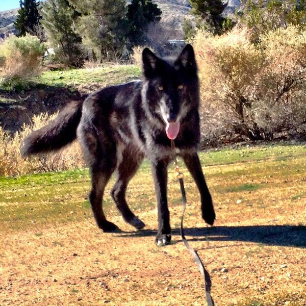 Teen Wolf Season 5 Behind the Scenes Romeo Wolf Dog actor 2.jpg