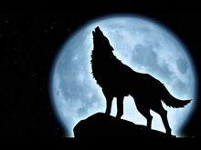 Loup .jpg
