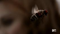Teen Wolf Season 3 Episode 22 De Void a fly