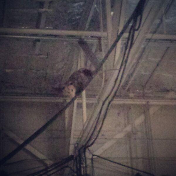 Teen Wolf Season 5 Behind the Scenes Rogue Possum in the rafters 022315.jpg
