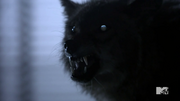 Teen Wolf Season 3 More Bad Than Good Werecoyote.png