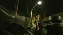 Shelley-Hennig-Malia-coyote-jumping-Teen-Wolf-Season-6-Episode-1-Memory-Lost