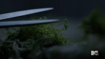Teen Wolf Season 3 Episode 19 Letharia Vulpina cutting fungus