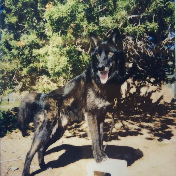 Teen Wolf Season 5 Behind the Scenes Romeo wolf dog actor.jpg