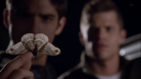 Teen Wolf Season 3 Episode 7 Currents Moth