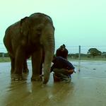 Washing the Elephant.PNG
