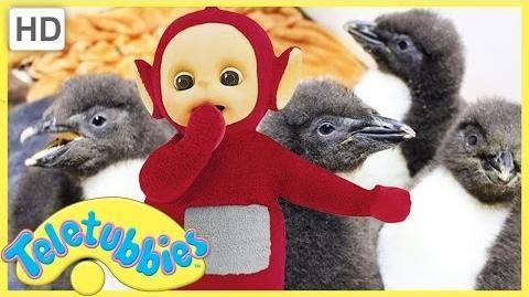 Teletubbies_English_Episodes_-_Feeding_Baby_Penguins_★_Full_Episode_243