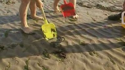 Digging in the Sand for Crabs