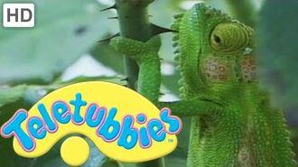 Teletubbies-_Chameleons_-_HD_Video