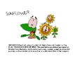 Kellogg's Rice Krispies Sunflower Don Bluth Cel (Version -1)