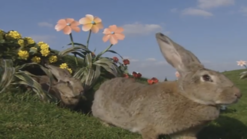 Teletubbies Rabbit 2