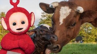 Teletubbies_English_Episodes_-_Cows_and_Calves_★_Full_Episode_172