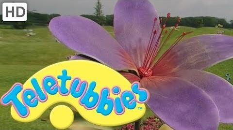 Teletubbies_Colours_Purple_-_HD_Video