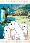 White cabbits