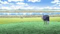 Ingracia Kingdom Anime