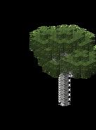 BirchForest4.bo3