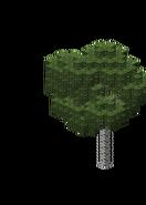 BirchForest3.bo3