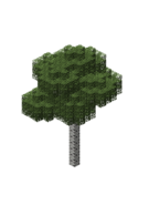 BirchForest1.bo3