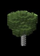 BirchForest5.bo3