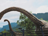 Les Brachiosaurus