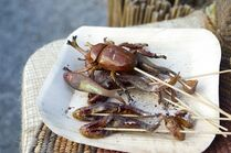 Terra Nova Market bugs & fish