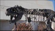 The Dinosaurs of Terra Nova