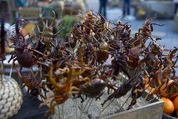 Terra Nova Market bugs3.jpg
