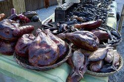 Terra Nova fish3.jpg