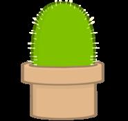 New cactus body