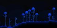 Bioma de champiñones superficie