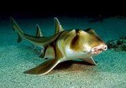 Tiburon Dormilon