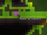 Bulbo de Plantera