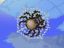 Яйцо паука