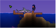 Пойманная акула