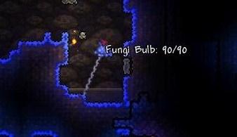 Fungi Bulb