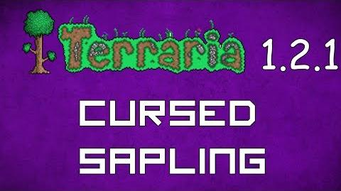 Cursed_Sapling_-_Terraria_1.2.1_Guide_New_Pet!