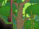 Murciélago de selva