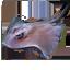Fishing Trophy stingray.png