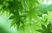 Green-leaves-code.jpg
