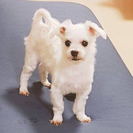 Gureum Jungkook's Pet.jpg