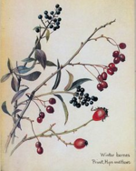 Herbs Winter Berry.png
