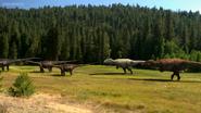 Carcharodontosaurs close to Alpha