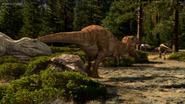 Carcharodontosaur scaring away Aucasaurs