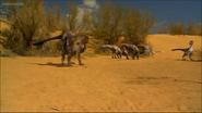 Fighting dinosaurs fossil