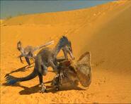 Blue Brow fighting Protoceratops