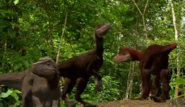 Pyroraptor pack