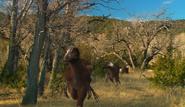 Troodon stalking